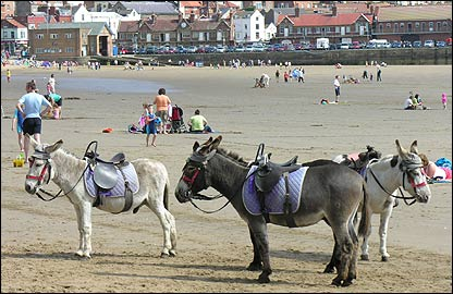 Donkeys on the South Bay, near the lifeboat Station.